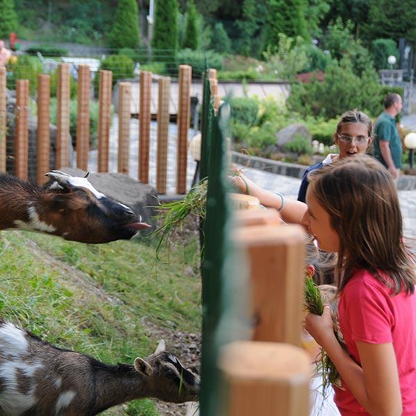 bambini imboccano animali all'hotel villamadonna