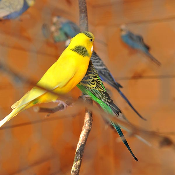 uccelli di colore verde e giallo nel maso dell'hotel villamadonna